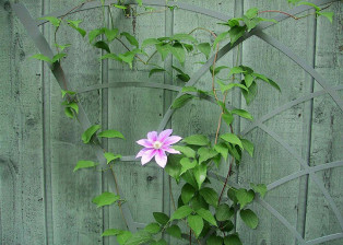 Clematis Trellis T104 by Trellis Art Designs